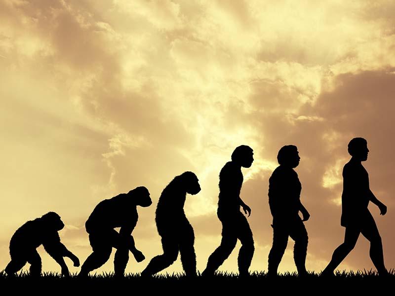 Silhuet af evolution fra abe til menneske
